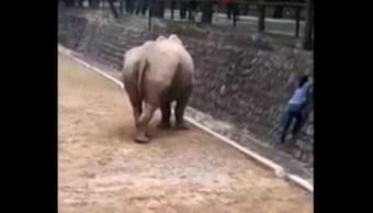"""Mujer arriesga su vida por recuperar su celular que cayó a la fosa del rinoceronte en el parque ecológico """"La Pastora, Nuevo León (FOROtv)"""