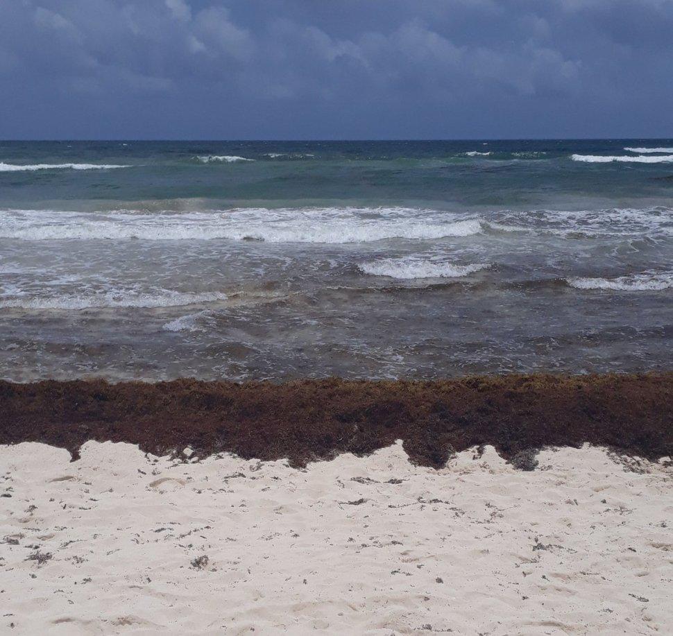 Foto Sargazo en Puerto Morelos, Quintana Roo 16 mayo 2019