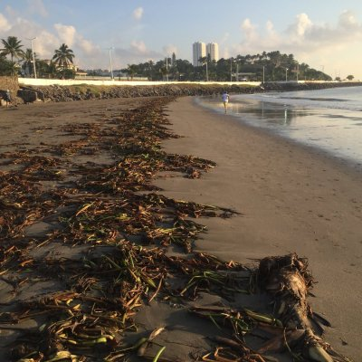 Sargazo llega a las playas de Boca del Río, en Veracruz