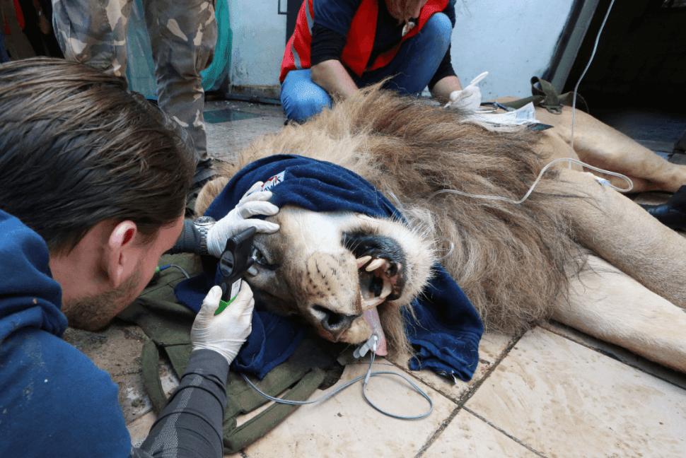 Sedan a leones para su traslado a Holanda, 7 de mayo de 2019, Tirana
