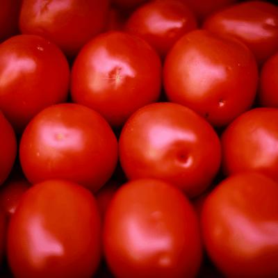 No descarta Seade denuncia ante OMC por arancel de EU a tomate