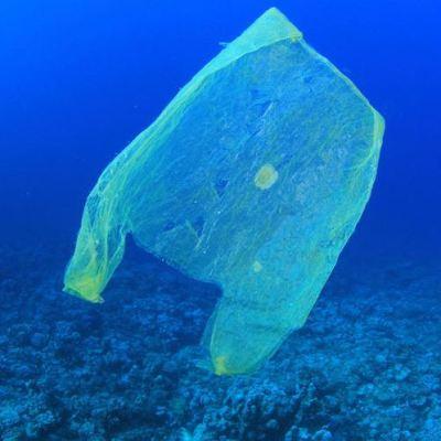 Video: Encuentran bolsa de plástico en el lugar más profundo del océano