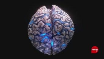 Foto: Funcion Neuronas Digestion Humanos 7 Junio 2019