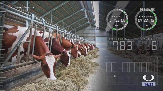 Foto: Agritech Vigilancia de ganado y de cultivos con drones