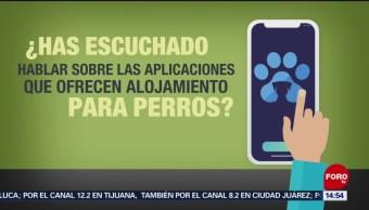 Foto: Aplicaciones para el cuidado de las mascotas