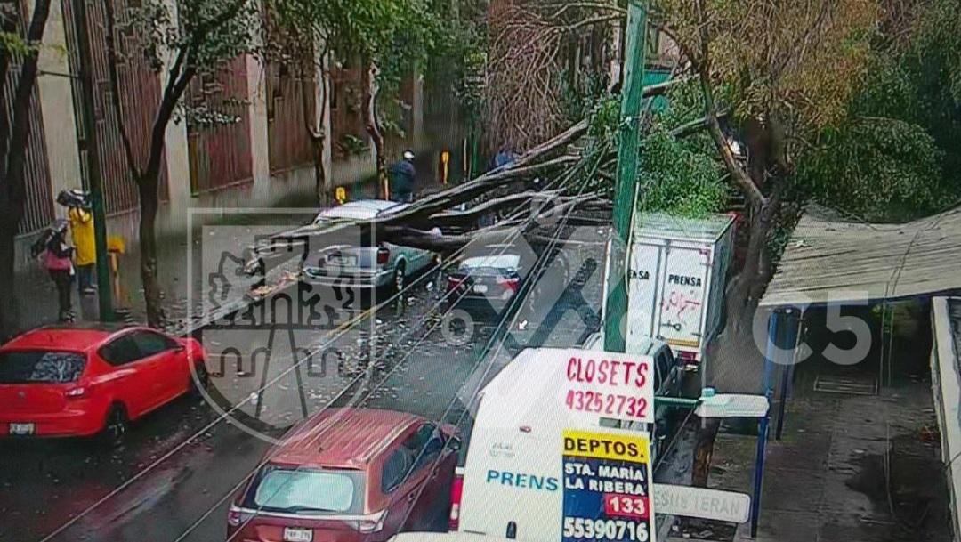 Tormenta deja 47 árboles caídos en Ciudad de México