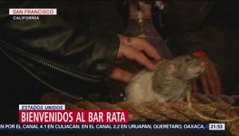 Foto: Bar Clientes Tocar Acariciar Ratas 14 Junio 2019