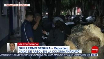 Cae árbol sobre vehículo en la colonia Anáhuac, CDMX