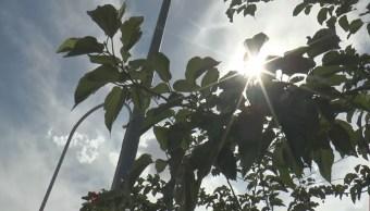 Foto: Protección Civil mantendrá la alerta amarilla porque las altas temperaturas continuaran durante este domingo y lunes, el 9 de junio de 2019 (Noticieros Televisa)