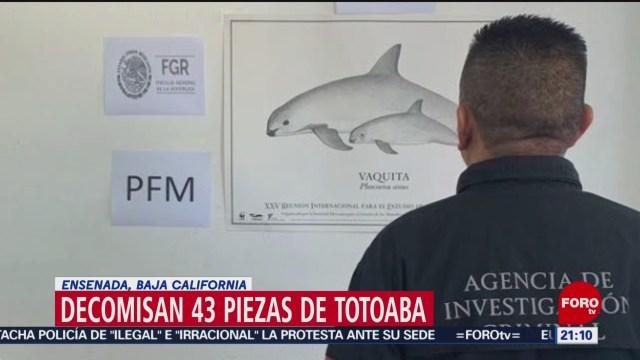 FOTO: Decomisan 43 piezas de totoaba en Ensenada, Baja California, 23 Junio 2019