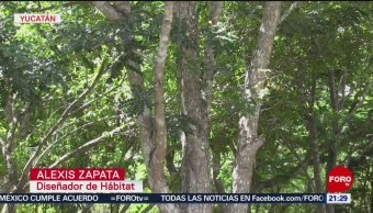 FOTO: Deforestación por quema y comercio ilegal en Yucatán, 15 Junio 2019