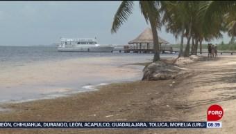 FOTO: El sargazo afecta playas de Quintana Roo y al sector hotelero, 29 Junio 2019