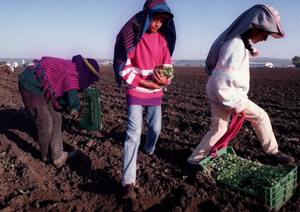 Trabajo-infantil-ninos-explotados-ninos-calle-economia