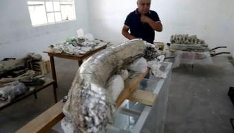 Foto: restos fósiles hallados en Puebla, 12 de junio 2019. EFE