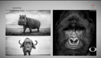 Foto: Fotógrafo Fotografías Animales Salvajes 25 Junio 2019