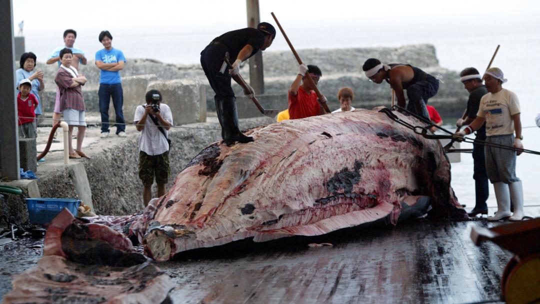 foto caza ballenas japon 30 junio 2019