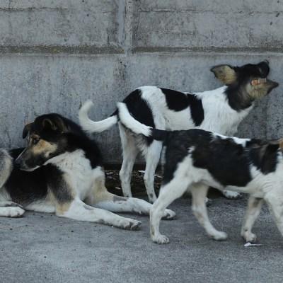 Denuncian envenenamiento masivo y asesinatos de perros en Zacatecas