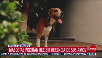 Foto: Las mascotas podrían recibir herencias en la CDMX