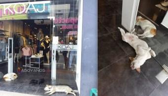Tienda-ropa-perros-callejeros-Calor-Colombia