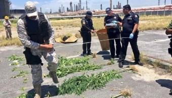 Foto: aseguran plantas de marihuana en refinería de Cadereyta, 17 de junio 2019. Noticieros Televisa