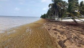 Isla de sargazo que amenaza al Caribe es información falsa