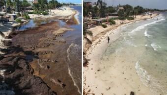 Foto: Playa cubierta de sargazo, el 29 de mayo de 2019, y la misma playa después de una limpieza, este jueves en Playa del Carmen, junio 15 de 2019 (EFE)