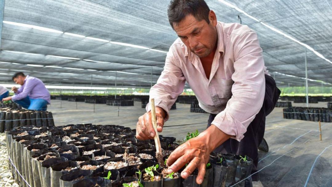 Foto:México invertirá 100 millones de dólares para llevar el programa 'Sembrando Vida' a Centroamérica, 21 junio 2019