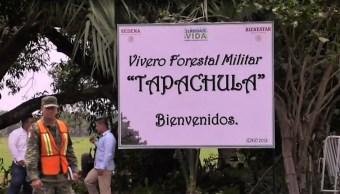 Cerca de 200 migrantes centroamericanos ya trabajan 'Sembrando Vida'