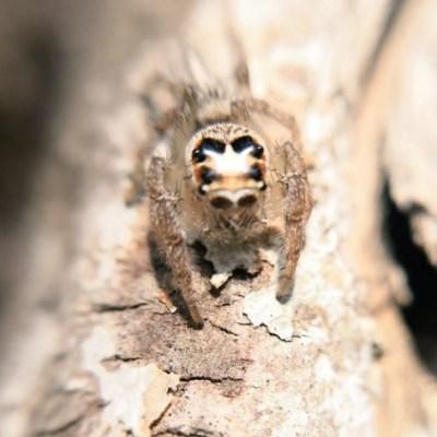Biólogo de la UNAM te ayuda a identificar arañas y bichos con una foto