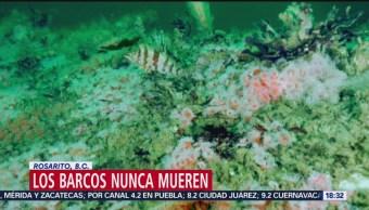 Barco hundido se transforma en arrecife artificial