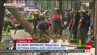 FOTO: Cae árbol sobre vehículo en alcaldía Cuauhtémoc