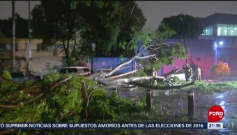 Foto: Cae Árbol Sobre Vehículo Colonia Del Valle Cdmx 18 Julio 2019