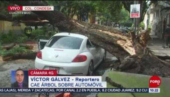 FOTO: Cae enorme árbol sobre un automóvil en la colonia Condesa, 20 Julio 2019