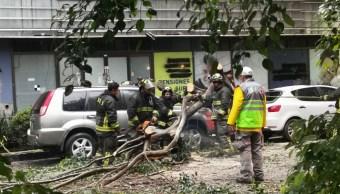 Foto: caída de árbol el colonia Juárez, alcaldía Cuauhtémoc, 8 de julio 2019. Twitter @kikabond