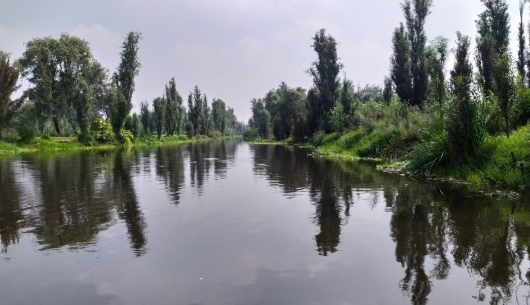 Foto: canal de Xochimilco, 10 d ejulio 2019. Twitter @XochimilcoAl