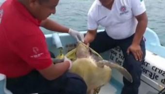 Foto: La tortuga fue liberada después de rescatarla, 27 de julio de 2019 (Noticieros Televisa)
