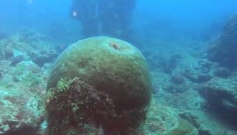 Foto: Investigadores descubren cinco arrecifes sumergidos en el suroeste del Golfo de México, el 20 de julio de 2019 (Twitter: @TecNM_MX)