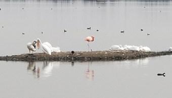 Foto: Los flamencos conviven con algunos pelicanos y otras aves, 17 de julio de 2019 (Twitter @HectorpadillaH)