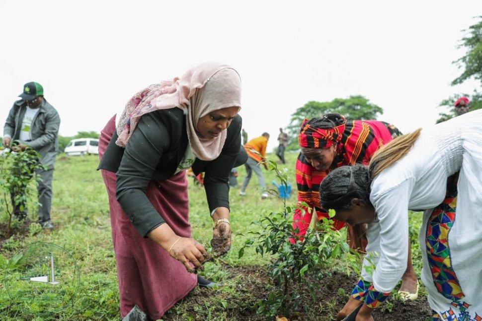 Foto: Green Legacy Iniciative en Etiopía. 31 julio 2019