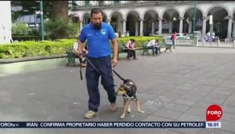 FOTO: Entrenarán a perros para detectar cáncer en Veracruz, 21 Julio 2019