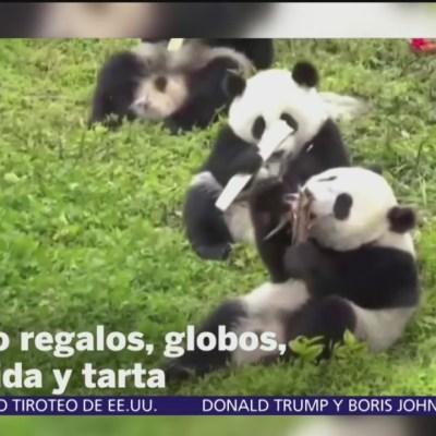 Hacen fiesta para 18 osos panda en China