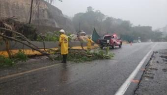 Caída de árboles tras lluvia en Jalisco.