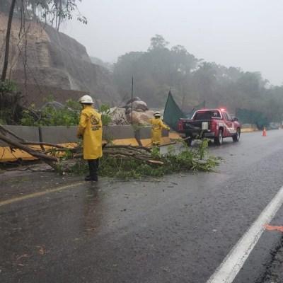 Cae árbol sobre vehículo en Jalisco, hay un muerto y dos lesionados
