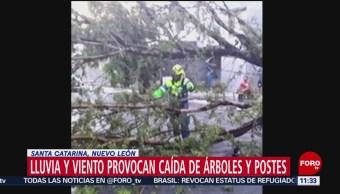 Lluvias provocan caída de árboles y postes en Santa Catarina, NL