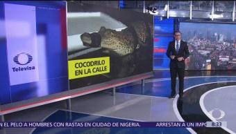 Policías de Guadalajara encuentran cocodrilo en la calle