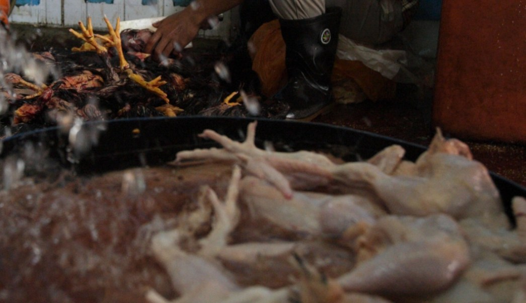 FOTO Inflación se desacelera a 3.95 por ciento anual en junio; productos con mayores precios al alza fueron pollo, transporte aéreo y aguacate (AP junio 2007 malasia)