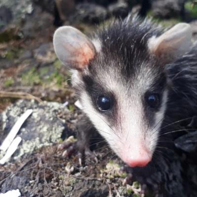Reserva Ecológica del Pedregal es única en el mundo por su biodiversidad