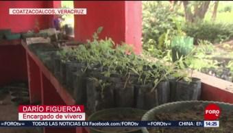 Roban plantas de vivero en Coatzacoalcos, Veracruz
