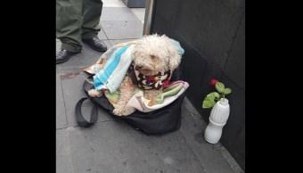 'Sol', el perrito 'vende-chicles' que se gana la comida junto a su dueño en el Zócalo de la CDMX