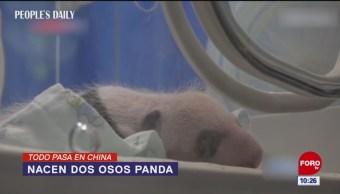 Todo Pasa En China: Nacen dos osos panda